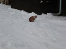 Prosincové sněhování