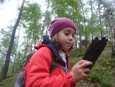 V lese se najde spousta zajímavých objevů, ze kterých se dá ledacos vyčíst