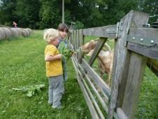 ...a zatím co oběti krmí kozy...
