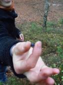 Listopadová borůvka z Laviny