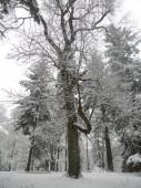 Proměny Arboreta Bukovina v prvním dubnovém týdnu roku 2015