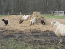 Naše stádo na jaře 2015