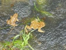 """""""Žába skáče po blátě"""" v praxi"""