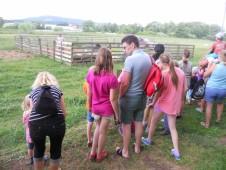 Letošní stříhání ovcí