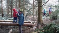 U prasečí pasti jsme přišli o pár stromků