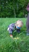 V květnu jsme zkoušeli jak motýli vidí...