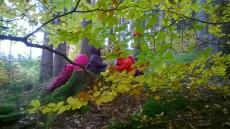 Podzimní sedmihorští skřítci.