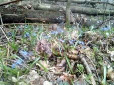 modrý poklad Bažantníku
